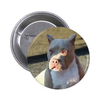 Botón del perrito de Staffordshire Terrier america Pins