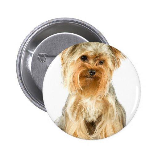 Botón del perrito de Yorkie