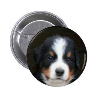 Botón del perrito del perro de montaña de Bernese