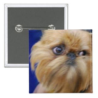 Botón del perro de Bruselas Griffon