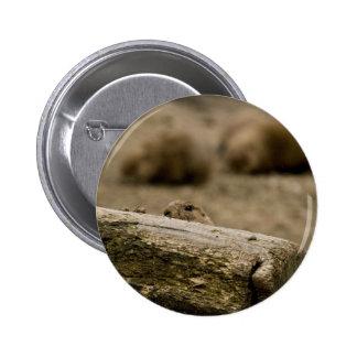 Botón del perro de las praderas 1531 pins