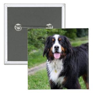 Botón del perro de montaña de Bernese, perno, idea Pin