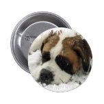Botón del perro de St Bernard Pin
