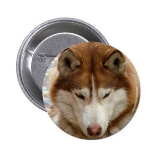 Botón del perro esquimal de Brown
