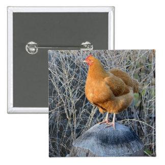 Botón del pollo pins