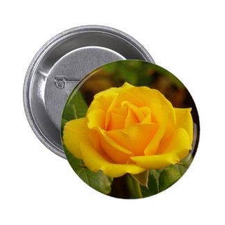 Botón del rosa amarillo pin redondo de 2 pulgadas