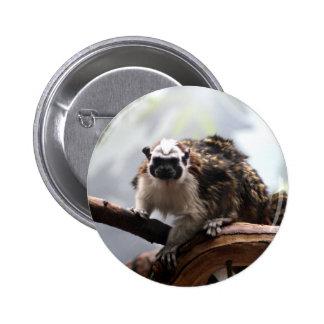 Botón del Tamarin de Geoffroy Pin