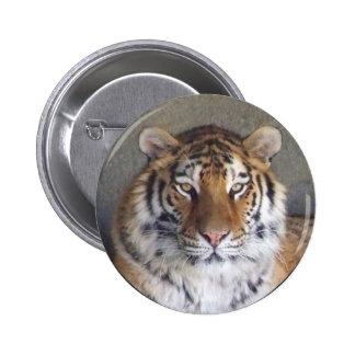 Botón del tigre pin
