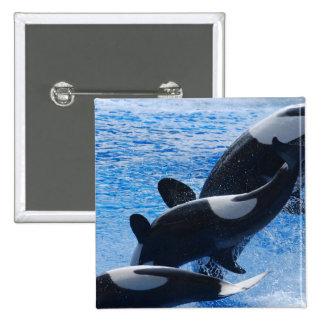 Botón del trío de la orca pins