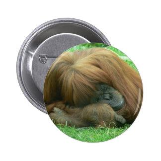 Botón el dormitar del orangután pin redondo de 2 pulgadas