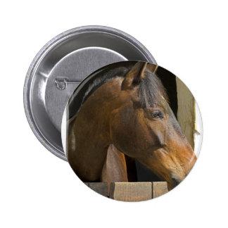 Botón excelente de los caballos pin