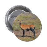 Botón fangoso de los ciervos pins