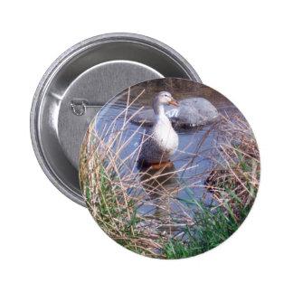 Botón femenino del pato del pato silvestre pin