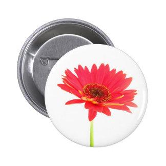 Botón floral de la margarita roja del Gerbera