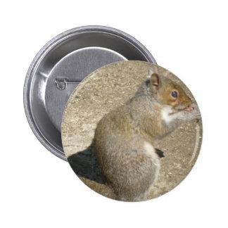 Botón hambriento de Horatio de la ardilla Pin Redondo De 2 Pulgadas
