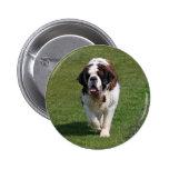 Botón hermoso de la foto del perro de St Bernard,
