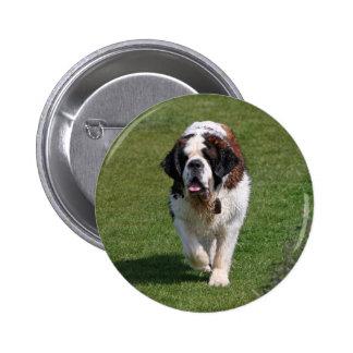 Botón hermoso de la foto del perro de St Bernard,  Pin Redondo De 2 Pulgadas