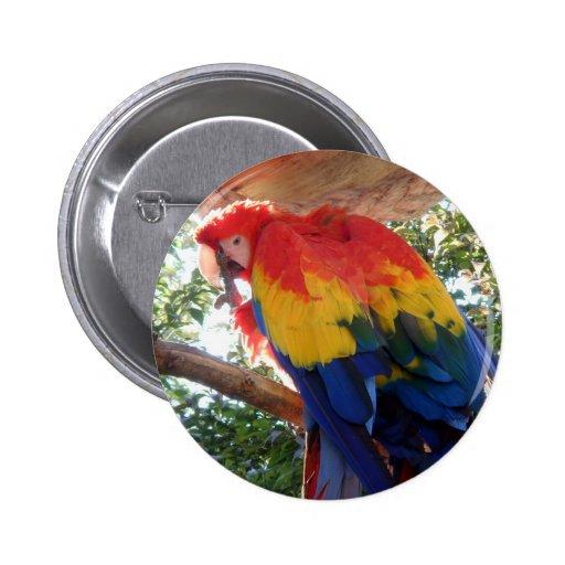 Botón hermoso de Pinback del pájaro Pins