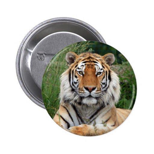 Botón hermoso principal de la foto del tigre, pern