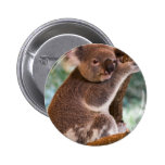 Botón lindo de la koala pins