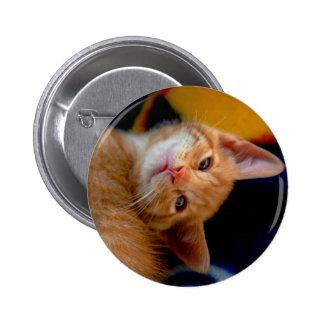 Botón lindo del gatito pins