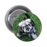 Botón miniatura del perrito de Schnuazer Pin