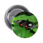 Botón negro de la mariposa pin