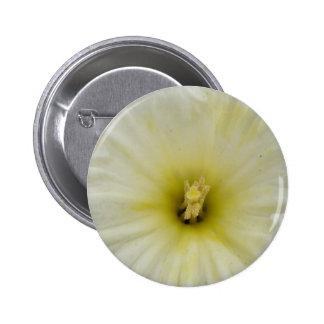 Botón pálido bonito del narciso pin redondo de 2 pulgadas