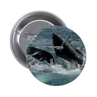 Botón redondo de la ballena jorobada pins