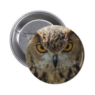 Botón redondo de la foto del búho pin