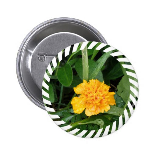 Botón redondo de la maravilla amarilla pin