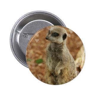 Botón redondo de Meerkat del bebé Pin