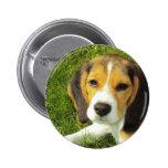 Botón redondo del beagle pins