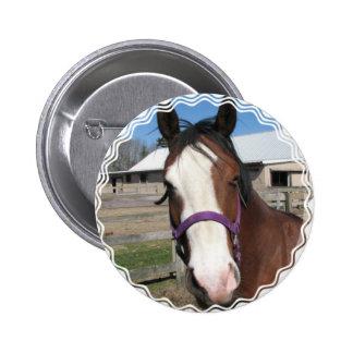 Botón redondo del caballo cuarto curioso pin