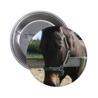 Botón redondo del caballo excelente oscuro de la b pin