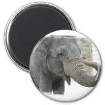 Botón redondo del elefante el tocar la trompeta imán para frigorifico