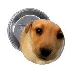 Botón redondo del perrito amarillo del laboratorio pins