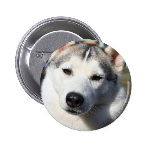 Botón redondo del perro del husky siberiano