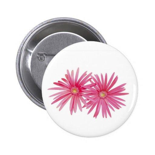 Botón rosado de la flor de la margarita