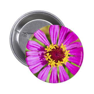 Botón rosado de la flor del gerbera