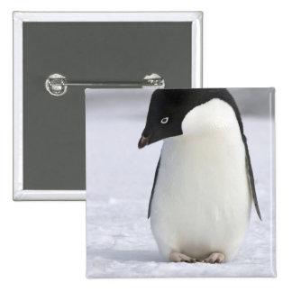 Botón solo del pingüino