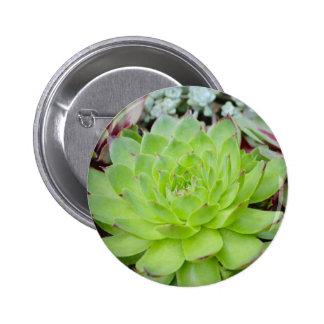 Botón suculento pin redondo de 2 pulgadas