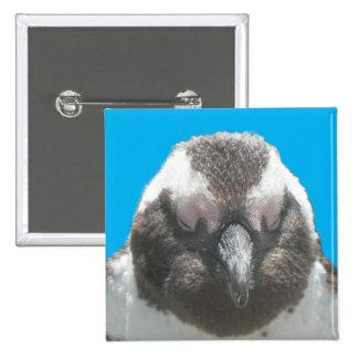 Botón surafricano de la cara del pingüino pin cuadrado