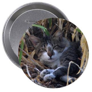 Botón tímido del gato del muchacho pin redondo de 4 pulgadas