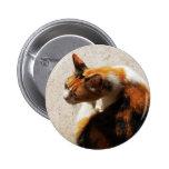Botón tricolor del gato pin