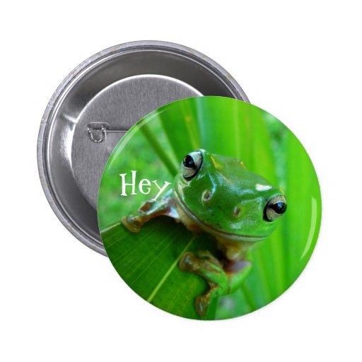 Botón verde de la rana arbórea
