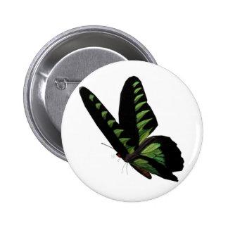 Botón verde y negro de la mariposa pins