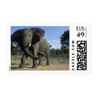 Botswana, Chobe National Park, Aggressive Bull Postage