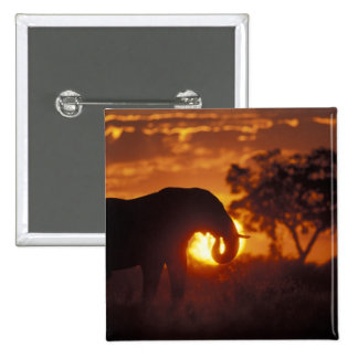 Botswana Chobe National Park Bull Elephant Pin