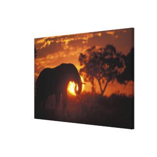 Botswana, Chobe National Park, Bull Elephant Canvas Print